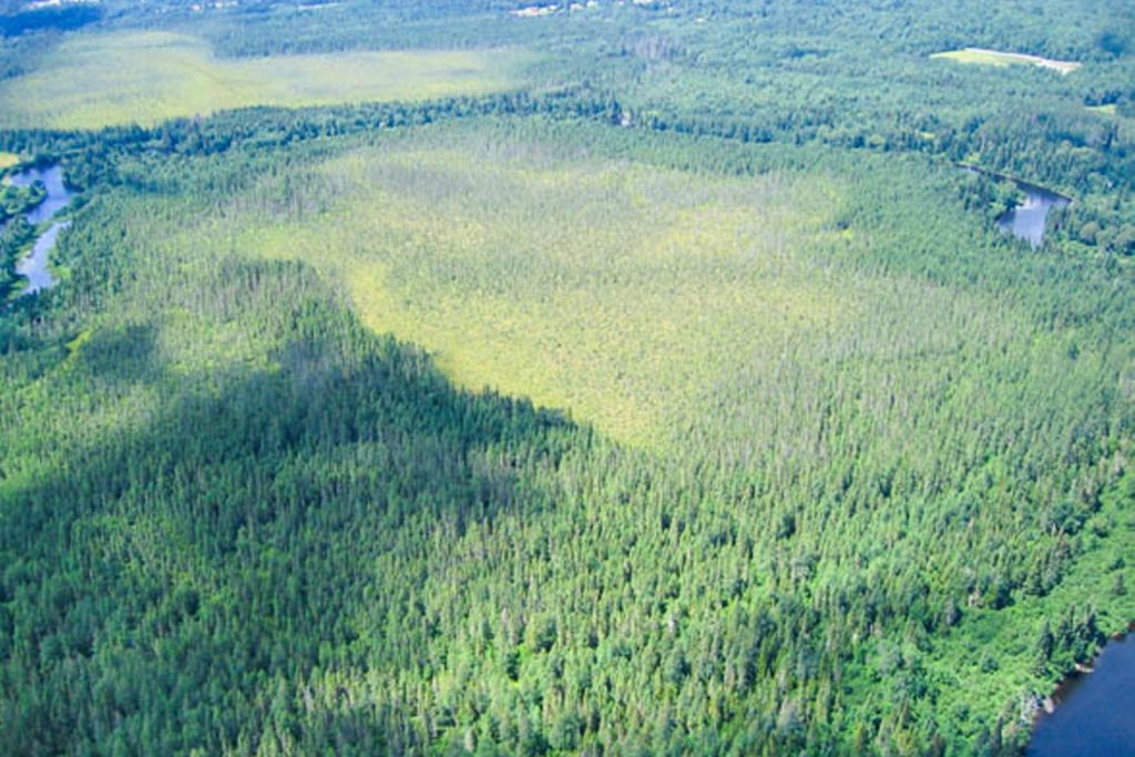 Image of Moose River Area aerial view